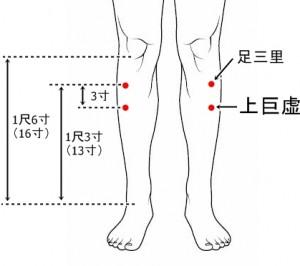 経絡経穴 足の陽明胃経 上巨虚