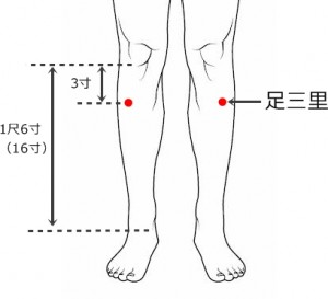 経絡経穴 足の陽明胃経 足三里