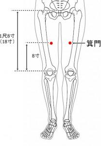 経絡経穴 足の太陰脾経 箕門(骨格有)
