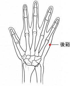 経絡経穴 手の太陽小腸経 後谿(骨格有)