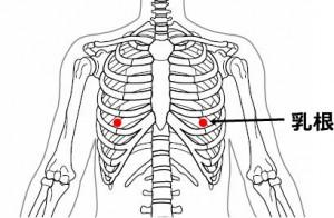 経絡経穴 足の陽明胃経 乳根(骨格あり)