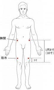 経絡経穴 足の陽明胃経 陰市