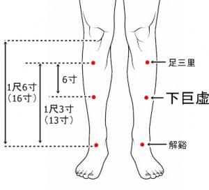 経絡経穴 足の陽明胃経 下巨虚