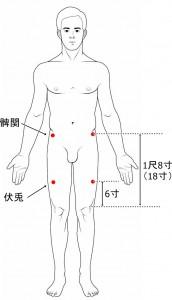 経絡経穴 足の陽明胃経 伏兎