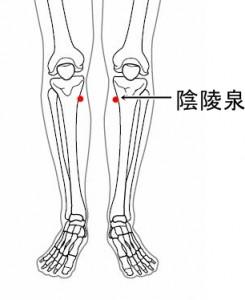 経絡経穴 足の太陰脾経 陰陵泉(骨格有)