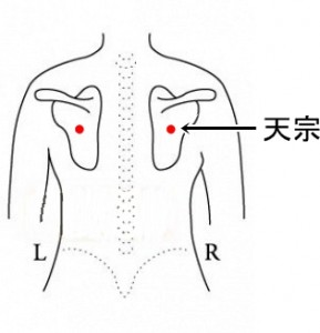経絡経穴 手の太陽小腸経 天宗