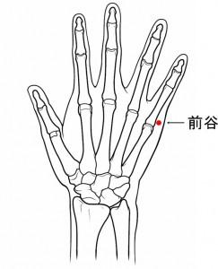 経絡経穴 手の太陽小腸経 前谷(骨格有)