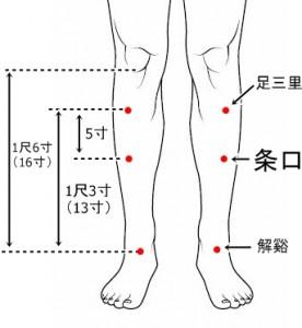 経絡経穴 足の陽明胃経 条口